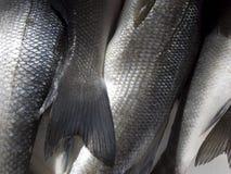 Fish scale. Closeup of fresh fish at fish market Royalty Free Stock Photography