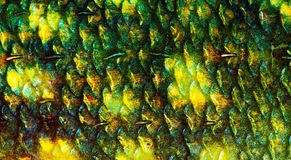 Fish scale Stock Photography