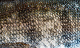 Fish scale Royalty Free Stock Image