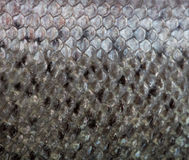 The fish scale close up. Royalty Free Stock Photo