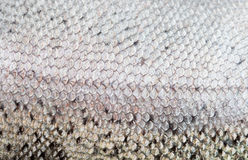 The fish scale close up. royalty free stock photography