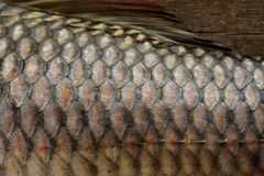 Fish scale Stock Images