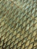 Fish scale texture Royalty Free Stock Images