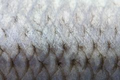 Fish scales royalty free stock images