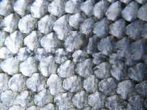 Fish scales. Close-up of salmon scales stock image