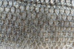 Fish scales background Stock Image