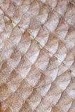 Fish scales Stock Image