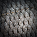 Fish scales Stock Images