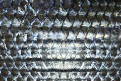 Fish scales Stock Photography