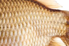Fish scales skin texture macro view. Geometric pattern photo Crucian carp Carassius scaly with Lateral line. Selective. Focus, shallow depth field Stock Photo