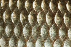 Fish scales skin texture macro view. Geometric pattern photo gold color Crucian carp Carassius scaly with Lateral line