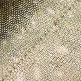Fish scales texture #1 Stock Photo
