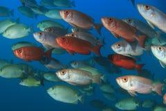 Fish school Stock Image