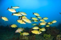 Fish school Royalty Free Stock Image