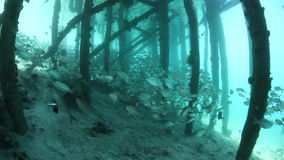 Fish Schooling Below Wooden Jetty. Fish school in the shadows of a pier in Raja Ampat, Indonesia. This region is within the Coral Triangle and harbors stock footage