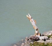 Fish sculpture at lake Royalty Free Stock Photos