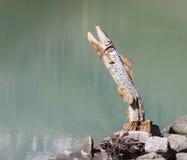 Fish sculpture at lake Stock Images