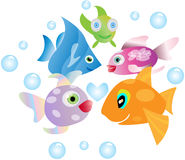 Fish in the sea. Shoaling image of fish in the sea, group gathering of 5 Royalty Free Stock Images