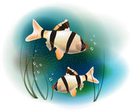 Fish in the sea. Couple of fish in the sea Royalty Free Stock Photos