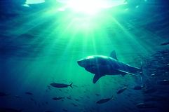 Fish and sea Stock Photography