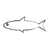 Fish sea animal. Vector illustration graphic design Royalty Free Stock Photography