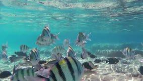 Fish in sea stock video