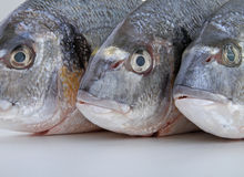 Fish, sea bream Stock Image
