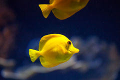 Fish in sea Royalty Free Stock Photo