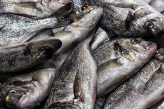 Fish sea food on ice Royalty Free Stock Photo