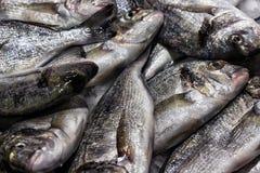 Fish sea food on ice Royalty Free Stock Photo