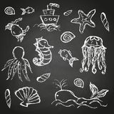 Fish and sea life hand drawn doodle icons set on black board eps10. Fish and sea life hand drawn doodle icons set on black board Stock Photography