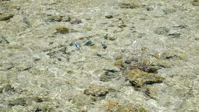 Fish in the sea near the shore stock video footage
