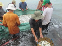 Fish sea ocean Vietnam Asia fishing catch Royalty Free Stock Photo