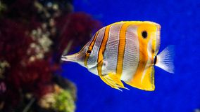 Fish in the sea / ocean, water world royalty free stock photo
