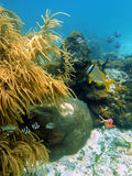 Fish with sea plume and hard coral Stock Photo