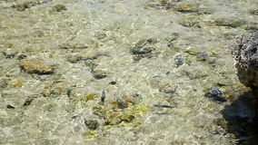 Fish in the sea in shallow water stock footage