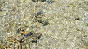 Fish in the sea in shallow water stock video footage