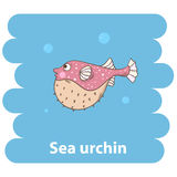 Fish Sea urchin. Sea urchin fish.Cute cartoon sea hedgehog vector illustration.Cartoon animal sea hedgehog isolated .Sea urchin,sea animal.Vector sea hedgehog Royalty Free Stock Photos