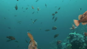 Fish and sea urchins among the rocks on seabed. stock footage