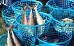 Fish and Seafood Auction Royalty Free Stock Image