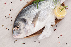 Fish. Seafood background. Stock Images