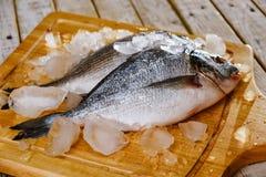 Fish seafood dorado, raw food,  gilt-head.Fish seafood dorado raw with ice,  eating. Fish seafood dorado, raw food on cutting board,  gilt-head.Fish seafood stock photo