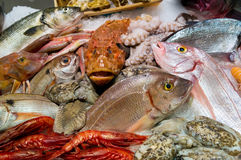 Fish and seafood Royalty Free Stock Photography