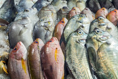 Fish Seafood on ice Stock Photos