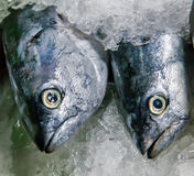 Fish Seafood on ice Royalty Free Stock Images