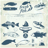 Fish. Seafood labels, fish packaging design, fishing logo elements Stock Images