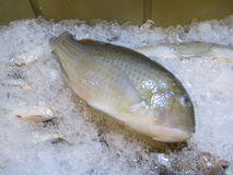 Fish at a seafood market. Fish lay on ice at a seafood market in Serpong, Indonesia Royalty Free Stock Photography