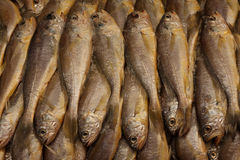 Fish in seafood market Stock Photography