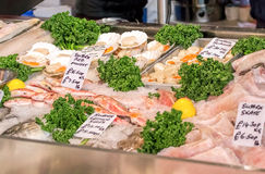 Fish & Seafood Market Stall. Fresh Fish Display Stock Images