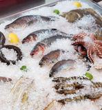 Fish and seafood on market stall. Fish and seafood on iced market display Stock Photography